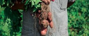 農場の野菜が食べられるお店-min